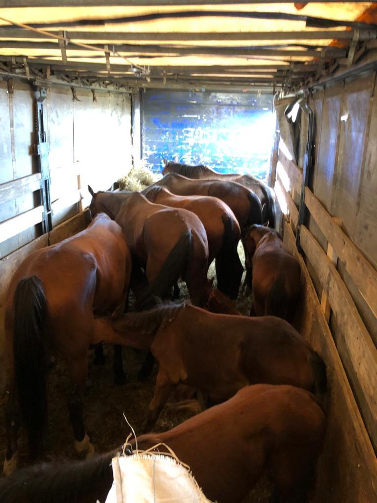 Управлением Россельхознадзора по Оренбургской области пресечена попытка вывоза лошадей в Киргизию по фальсифицированным документам