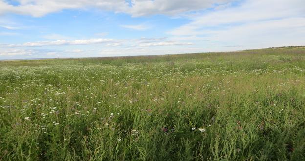 Арендатор допустил зарастание сельхозучастка на площади более 5,3 тыс. га
