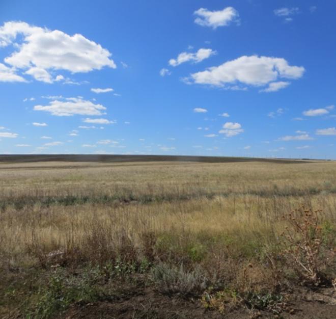 Бездействие собственника сельхозугодья в Курманаевском районе привело к административному штрафу