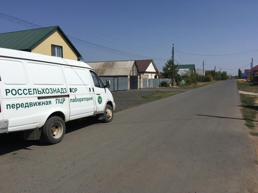 В селе Илек Оренбургской области обнаружен некарантинный сорняк