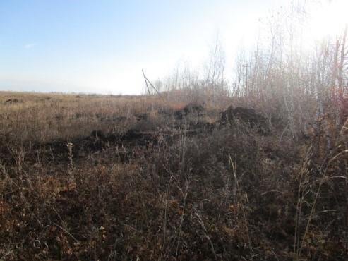 В Пономаревском районе земельный участок  введен в сельскохозяйственный оборот